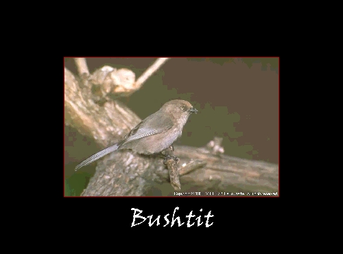 published research papers on bird populations