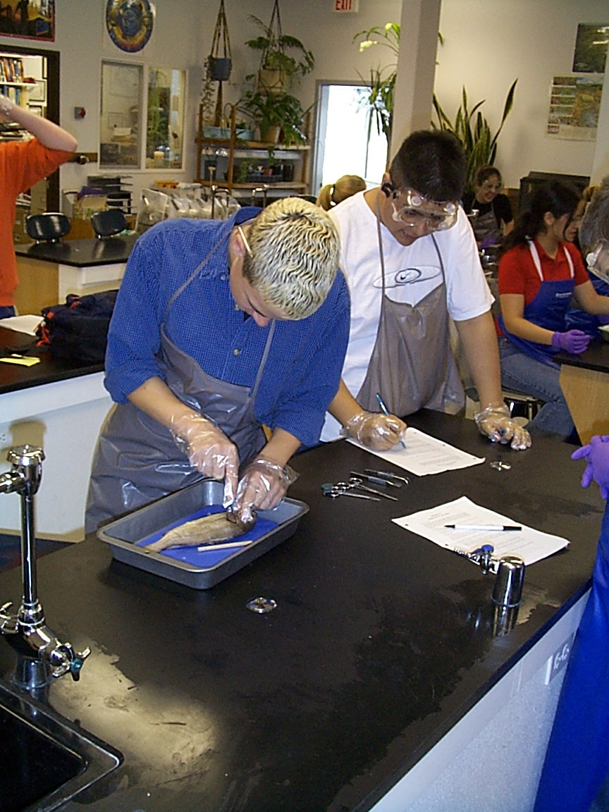 Biology dissections for Fish lab test